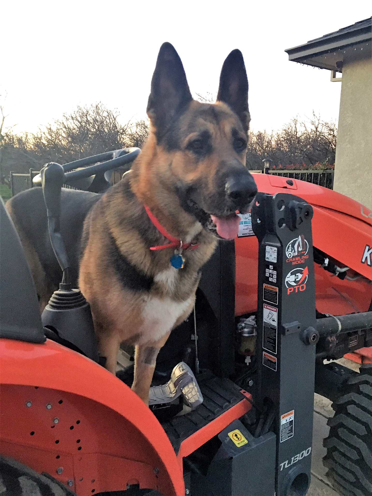 Buddy-on-Tractor