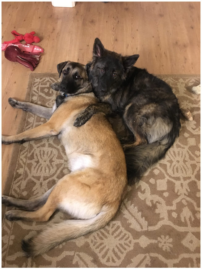 Two adopted dogs have really bonded.